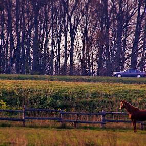 Ready,Steady,Go! by Kaja Radošević - Animals Horses