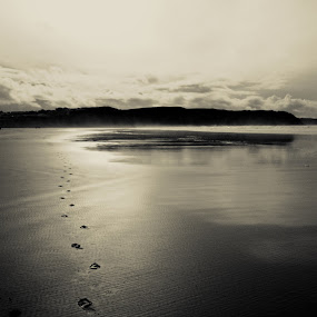 reflections and footprints by Sal Hosking - Landscapes Beaches ( waterscape, reflections, beach )