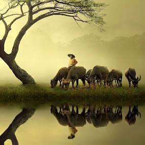 The King Of Shepherd by Ipoenk Graphic - Digital Art People