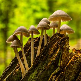 Climbing fungis by Peter Samuelsson - Nature Up Close Mushrooms & Fungi