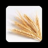 GrainSynth