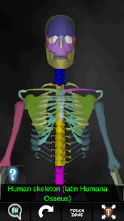 Bones Human 3D (anatomy) - screenshot thumbnail