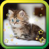 Cute Kittens HD live wallpaper