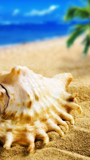 Sea Shells Live Wallpaper