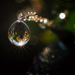 dew dark by Wahyu Budiyanto Toak - Abstract Water Drops & Splashes (  )