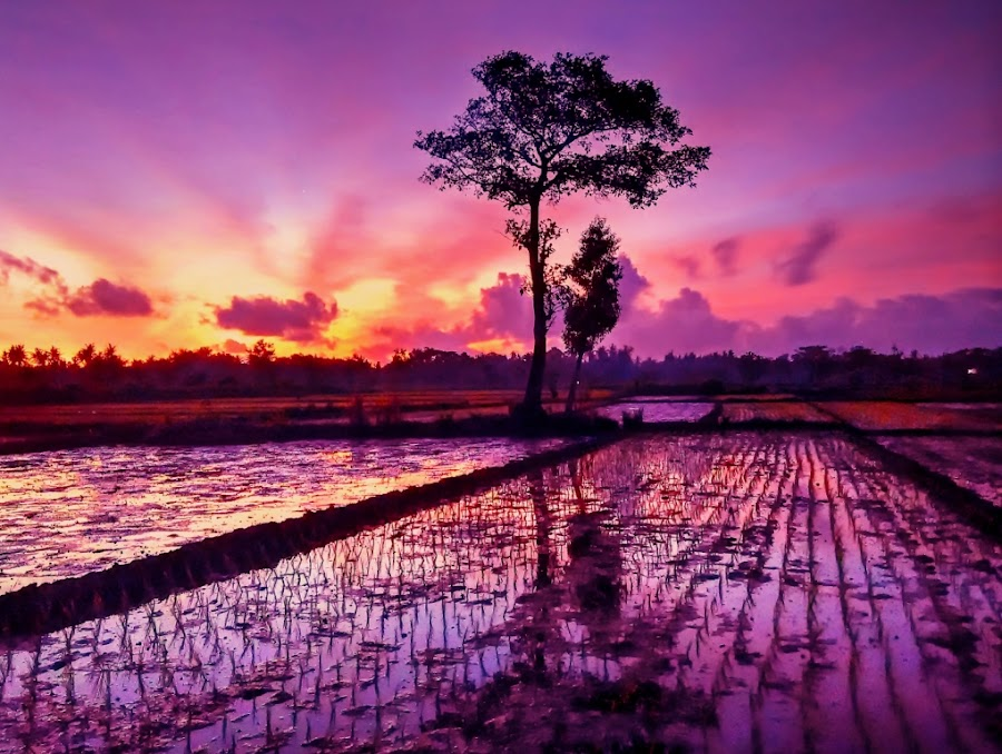 Twilight in rice fields by Nur Wide - Instagram & Mobile Android