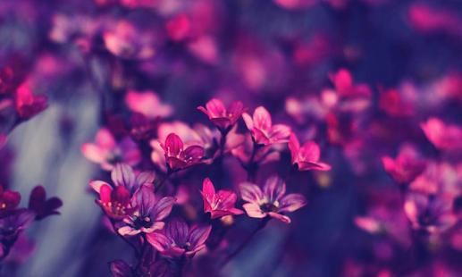 Violet Flowers Wallpapers - screenshot thumbnail