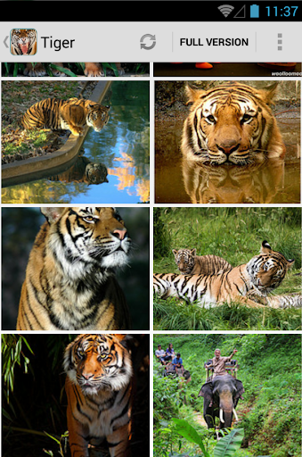 Tiger Backgrounds Wallpaper