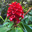 Red Tower Ginger