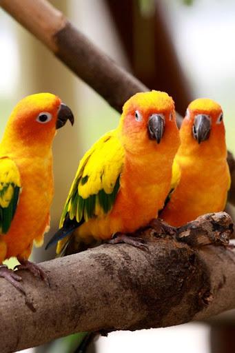 玩免費娛樂APP|下載Birds Wallpaper app不用錢|硬是要APP