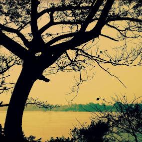 Bank of Ganges by Debraj Gupta - Nature Up Close Trees & Bushes ( bushes, ganges, trees, bank area of ganges, river )