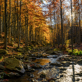 Autumn stream by Roberto Melotti - Landscapes Forests ( roberto melotti, runlet, parco dei cento laghi, bourn, brook, forest, woods, italy, bourne, autumn stream, river,  )