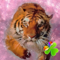 Pink Tiger Theme GO Launcher icon