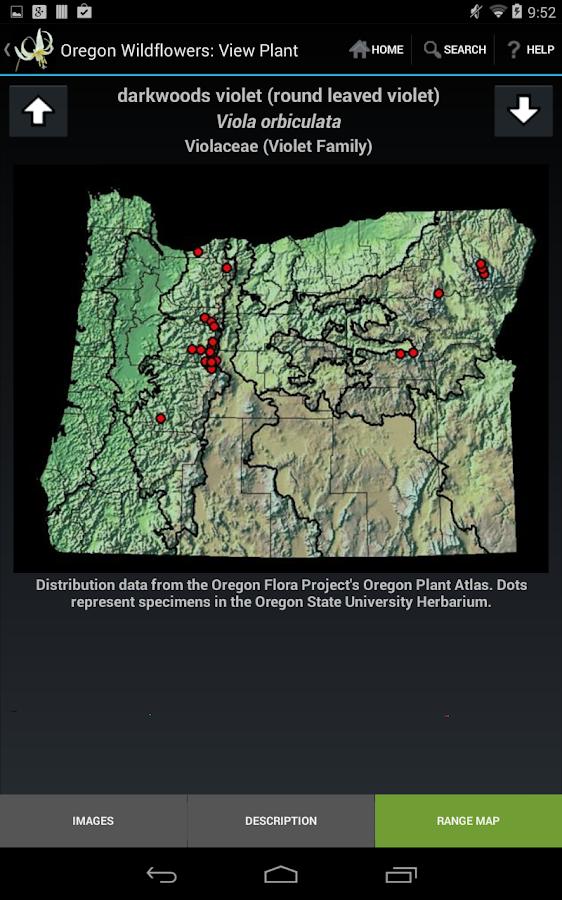 Oregon Wildflowers- screenshot