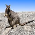 Australian Mammals icon
