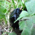 Black Slug