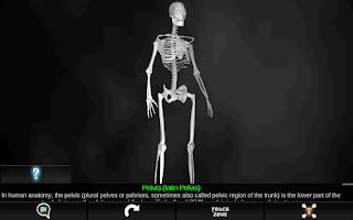 Screenshot of Bones Human 3D (anatomy)