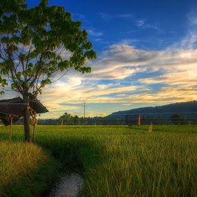 morning bliss by Jan Robin - Landscapes Prairies, Meadows & Fields
