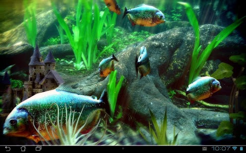 Aquarium Live Wallpaper Pc - free download suggestions