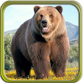 Puzzi puzzles bears in HD
