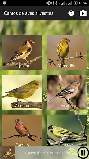 Cantos de aves silvestres