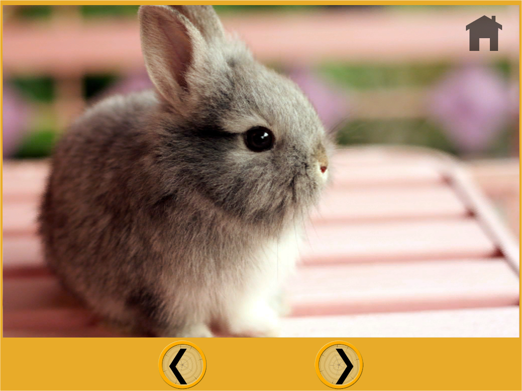 beautiful rabbits for kids  Android Apps on Google Play