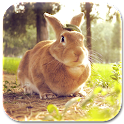 rabbit lock & wallpaper icon