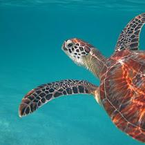 Maldives Biodiversity
