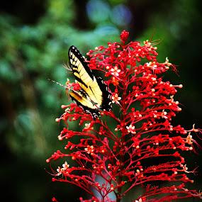 Flower & Butterfly by Toni Haas - Flowers Single Flower ( butterfly,  )