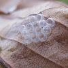 true bug eggshells