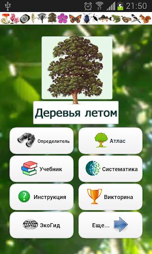 ЭкоГид: Деревья летом