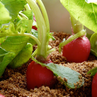 """Planted"" Radish and Greek Yogurt  Appetizer"