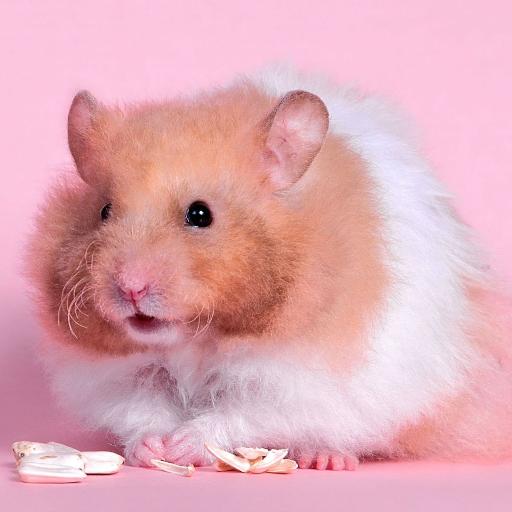 Hamster Wallpaper Canlı LOGO-APP點子