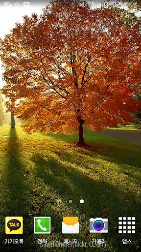 눈부신아침햇살나무배경