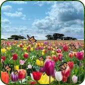 Tulip Butterfly LWP