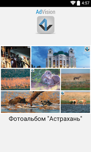 AdVision. Astrakhan region