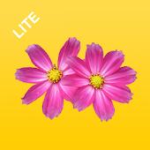 Flowers Preschool Toddler Lite