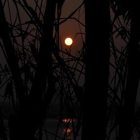Sunset by Dong Bui - City,  Street & Park  Skylines ( bamboo, silhouette, sunset, hanoi, vietnam, trocphunc )