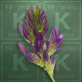 Alfalfa Potassium Calculator