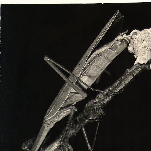 Cx Insects-Praying Mantis - Margaret Bourke-White — Google