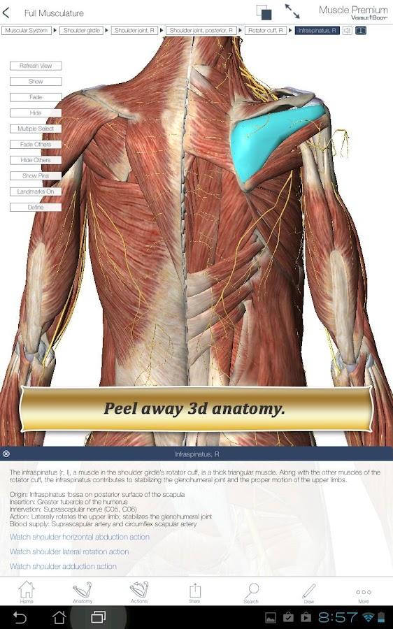 Muscle Premium- screenshot