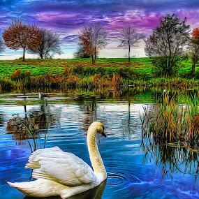 Swantastic by Catherine Cross - Digital Art Animals ( clouds, water, bird, reflection, sky, trees, swan, lake, landscape, feathers, pond,  )