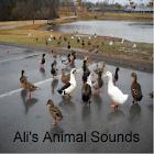 Ali's Animal Sounds icon