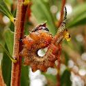 Callistemon sawfly (2)