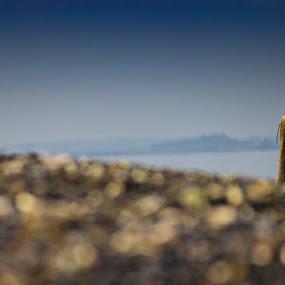 I can see you by Gerard Toney - Animals Birds ( bird, sea, beach, birds, heron )