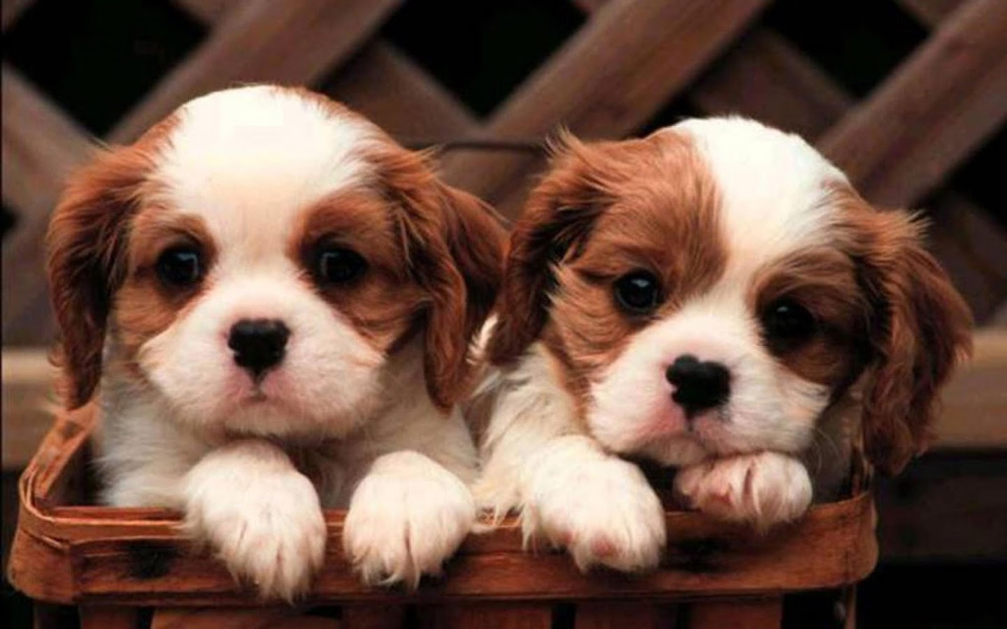 Dogs Wallpaper puppy dog wallpaper - android apps on google play