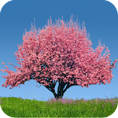 Spring Trees Live Wallpaper