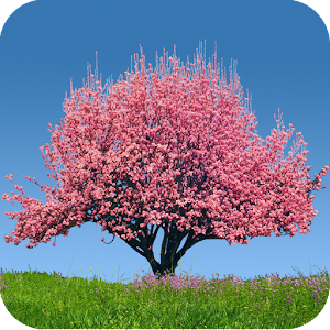 Spring Trees Live Wallpaper 個人化 App LOGO-APP試玩