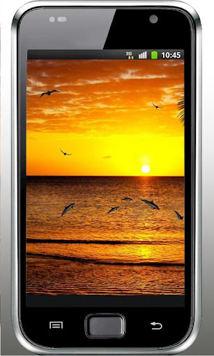 Dolphins Sunset live wallpaper