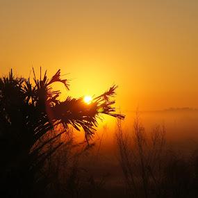 Tropical Sunrise by Mary Gerakaris - Landscapes Sunsets & Sunrises ( corporate office art, sunrises, brightly colored sky, florida sunrises, artisitic photography, morning scenes, natural beauty, sunrise silhouette, golden hour, sunset, sunrise, , Earth, Light, Landscapes, Views )